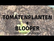 TM18#27 : Mijn tomatenplanten + nieuwe blooper