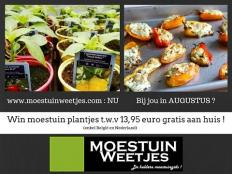 Toms Moestuin 2016 # 27 : Moestuin plantjes wedstrijd