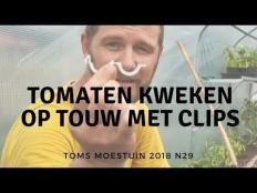 TM18#29 / Tomaten kweken op touw met tomaten clips