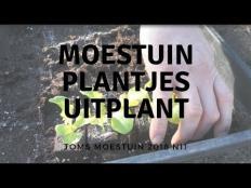 TM18#11 : Moestuinplantjes van Moestuinweetjes uitplanten