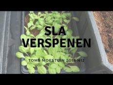 TM18#12 : Sla verspenen en een overzicht van de plantjes