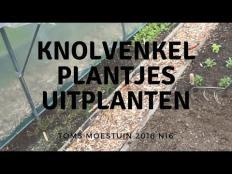 TM18#16 : Knolvenkelplantjes uitplanten en praatje met Cyriel