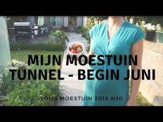 TM18#30 : Mijn moestuin tunnel serre begin juni