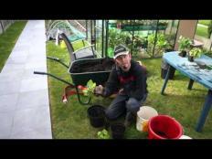 Toms Moestuin 2016 # 28 : Habanero pepers en Tiny Tim tomaat in potten