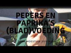 TM18#10 : Pepers, paprika's en aubergines (blad)voeding geven