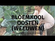 TM18#26 : Mijn weeuwenteelt bloemkool oogsten
