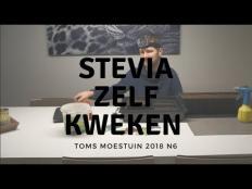 TM18#6 : Stevia kweken uit zaad