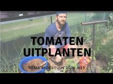 TM18#25 : Mijn tomaten uitplanten in de moestuin tunnel